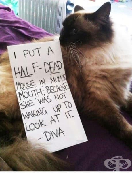 Сложих полумъртва мишка в устата на мама, защото тя не се събуждаше, за да я види – Дива.