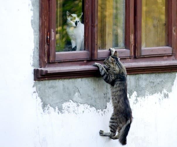 Ромео и Коткиета