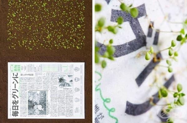 Вестник, който помага на растенията да израснат навреме.