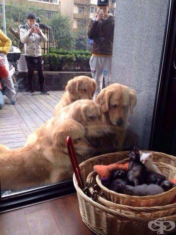 Първа среща с котенца