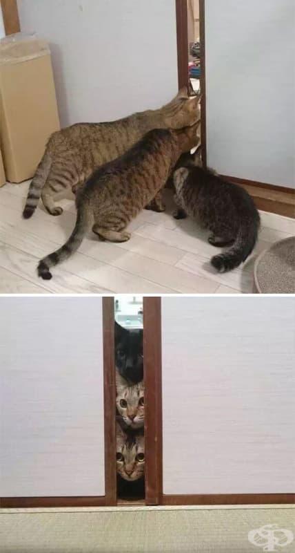 Котки, които за първи път виждат прахосмукачка