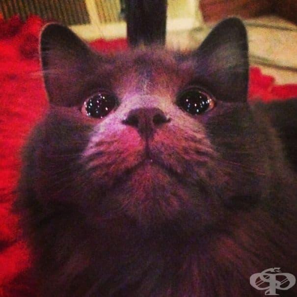 Котка, която вижда коледно дръвче за първи път