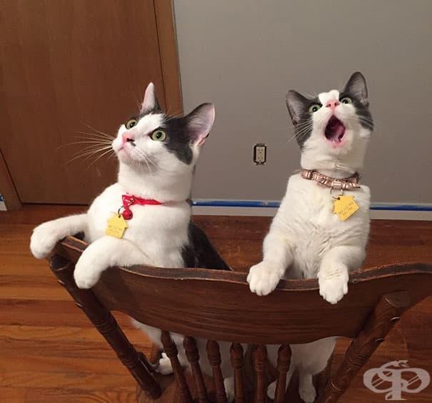 Реакцията на котки, които за първи път виждат как се върти вентилаторът на тавана