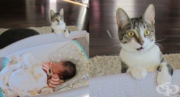 Забравихме да кажем на котката си, че имаме бебе