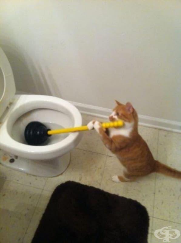 Понякога котките изразяват своята благодарност като помагат с домакинската работа.