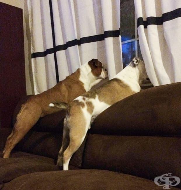 Мисля, че едно от кучетата е по-умно от другото…