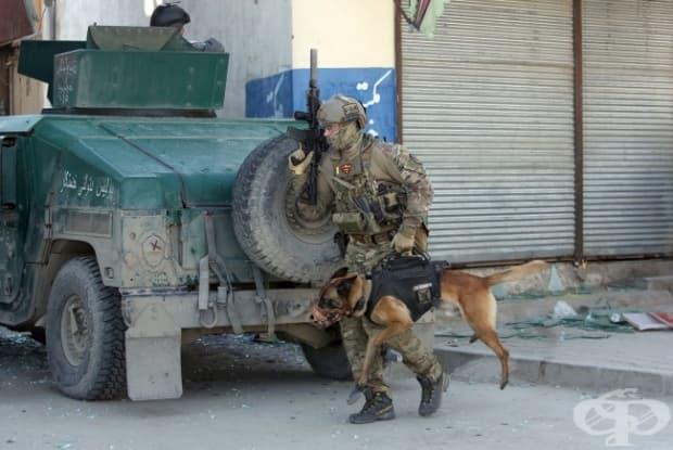 Преносимо тактическо куче.
