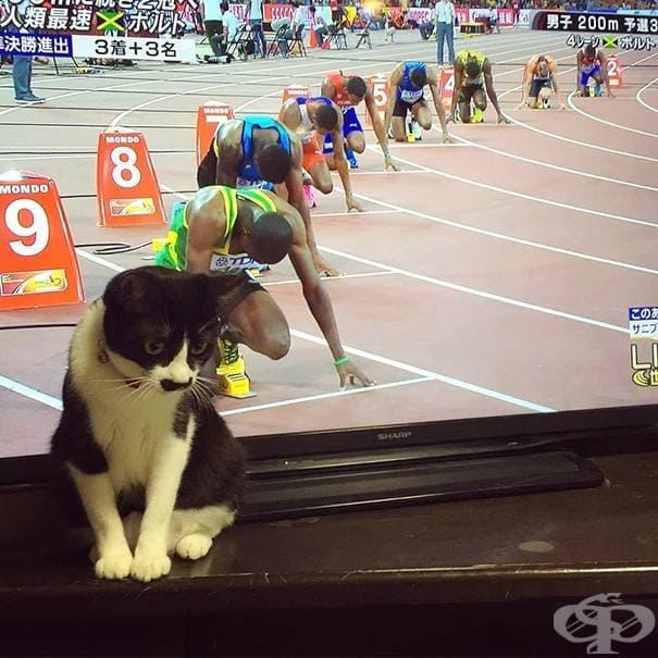 Да уловиш момента със своята котка