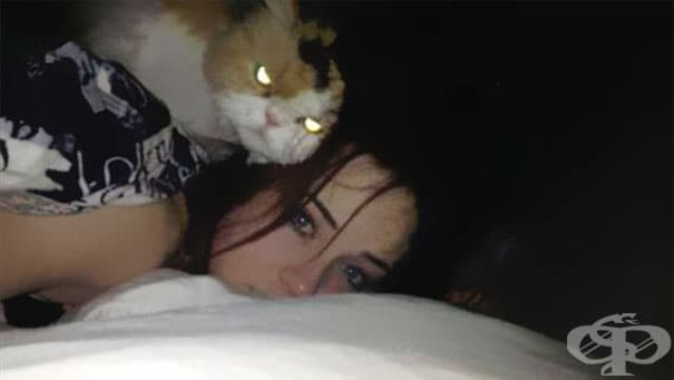 Как да познаете, че вашата котка тайно планира да ви убие