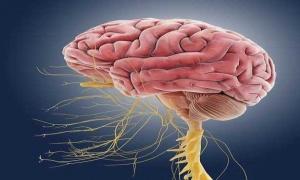 Кои са първите сигнали за невродегенеративни заболявания и как да помогнем?