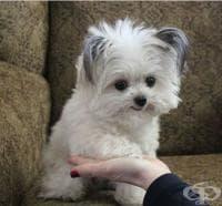 Анималотерапия - лечебната сила на животните
