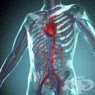 Аргининът воюва със сърдечните заболявания
