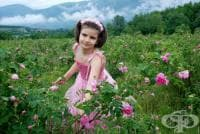Българска маслодайна роза, Казанлъшка маслодайна роза, Българска роза, Казанлъшка роза