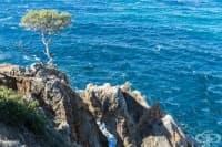 Морски Бор