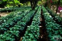 Климатичните промени ще повишат цената на кафето и ще влошат качеството му
