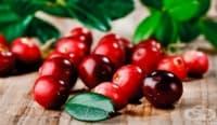 Червените боровинки помагат в борбата с отслабването