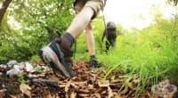 Животът в планината значително понижава риска от сърдечносъдови заболявания