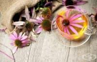 Ехинацеята е мощно средство за силна имунна система