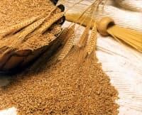 Килограм жито за прераждане на организма