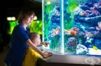 Аквариум с рибки действа успокоително на детето