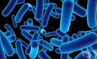Някои бактерии могат да усещат миризми