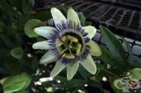 Цветята в саксия намаляват стреса в офиса