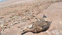 Езерото Поопо в Боливия изчезна напълно
