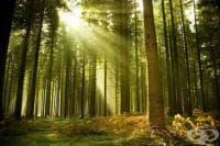 Младите тропически гори поглъщат много повече въглероден двуокис