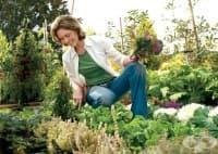 Градинарството подобрява настроението и помага на жените да отслабнат