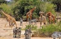3/4 от животинските видове може да изчезнат от Земята през следващите векове