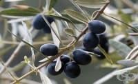 Турски учени изобретиха екологична пластмаса от костилки на маслини