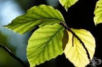 Създадоха листо, което може да произвежда лекарства навсякъде, където има слънчева светлина