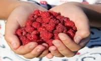 Изследване откри, че малините помагат на хора в преддиабетно състояние