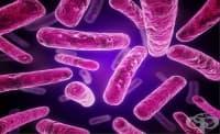 Живеещите заедно имат общи бактерии