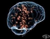 Физическата сила показва колко здрави са мозъците ни