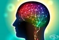 Човешкият мозък избира сам в какво да вярва