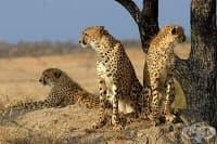 С 58 процента е намаляла глобалната популация на дивите животни от 1970 г. насам
