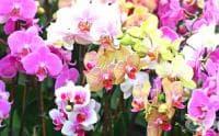 Увеличеното ниво на азота в атмосферата намалява многообразието на растенията