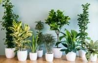 Домашните растения подобряват психиката и имунната система