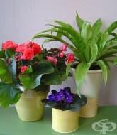 Стайните растения ни помагат
