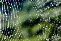 Учени разработиха слухов апарат, вдъхновени от нишките на паяка