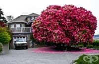 16 от най-красивите дървета в света