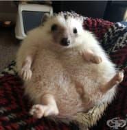 24 снимки на бременни животни
