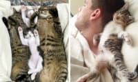 17 Факти за котките, които ни карат да ги обичаме още повече