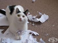 20 снимки на пакостливи котета