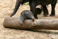 15 малки слончета, които могат да ви разсмеят моментално