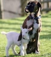 15 снимки на необичайно приятелство между животни