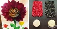15 снимки доказват, че от скука човек може да създаде креативни изобретения