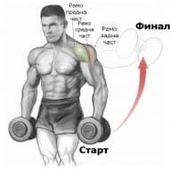 Упражненията за рамо и мускулите, които те засягат (инфографика)