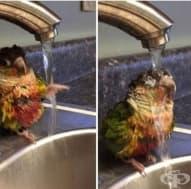 20 очарователни снимки на животни, които правят странни неща
